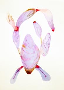 Innesti #23 acquerelli su carta 35x25 cm_2015